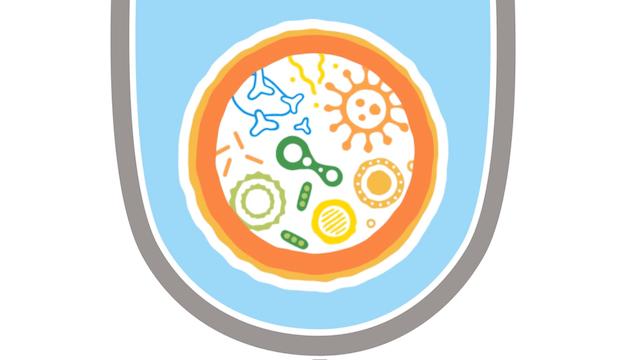 腸内細菌叢